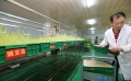 加盟种植芽苗菜未来有很大前景-益康园芽苗菜技术