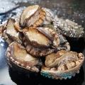 海里小怪兽,海鲜零售新物种 新鲜海鲜更多享受