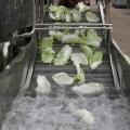 果蔬氣泡清洗機 全自動洗菜機 大棗清洗機
