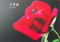 十字紋布紋保護膜