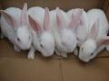大型种兔养殖场