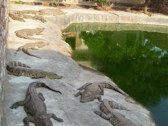 鳄鱼站立简笔画步骤