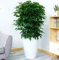 廣州綠植租擺流程介紹植物租賃的公司