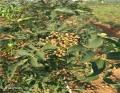 九葉青花椒苗哪個品種好吃