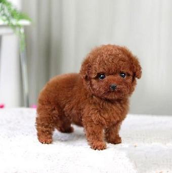 超萌卡哇伊韩国矫小体聪明可爱玩具型泰迪熊宝宝