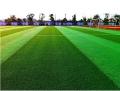 足球場7人制雙色草坪需要多少錢