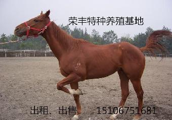 哪里有卖马的,乘骑马多少钱?