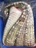 人工养殖鳄鱼违法吗