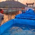 無毒帆布養殖魚池,室內支架養殖水池,養殖蝦池批發