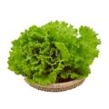 羅莎綠生菜新鮮花葉花邊西餐配菜果蔬綠色蔬菜沙拉火鍋