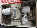 上海好的杀虫公司 上海专业消灭跳蚤 上海怎么杀白蚁