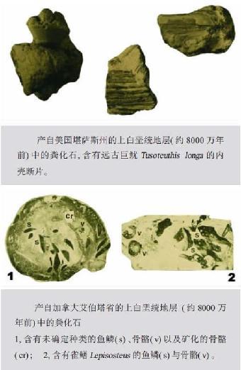 粪化石(coprolite),化石粪便,史前动物所排放,鱼类,爬行