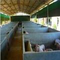 溫氏保暖豬場卷簾布、低價批發養殖場帆布
