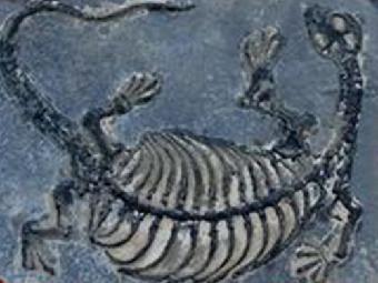 怎样鉴定出手爬行动物化石
