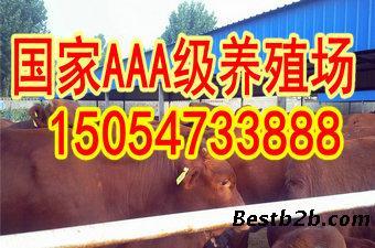 一头牛有多重天津_志趣网