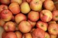 M9T337蘋果苗基地、M9T337蘋果苗批發