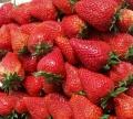 日本淡雪草莓苗多少钱 日本淡雪草莓苗批发基地