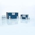 Qiagen 基因組DNA小提試劑盒