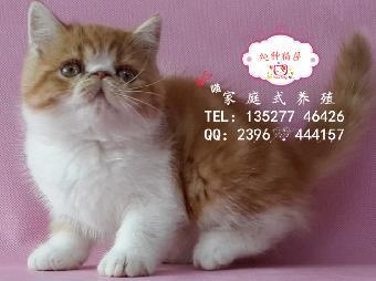 表情多多各种可爱超萌动作的加菲猫 肥嘟嘟的加菲猫驱