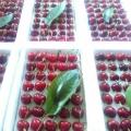 4公分黑珍珠樱桃苗价钱多少,黑珍珠樱桃苗