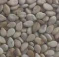 大量非洲进口优质芝麻原料