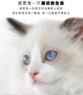 貓糧代工 貝可恩營養貓糧 鮮肉配方 貓糧OEM貼牌