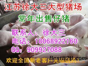 云南猪价格今日猪价20斤多少元一斤_志趣网