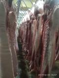 冷鮮肉白條鮮肉零售