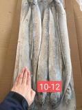 刀魚10斤裝