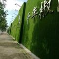 墙壁仿真草皮多少钱一平米