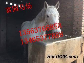 中国哪里有卖马的,我想养马哪里有养马基地