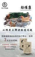 鸡肠炎的症状和治疗—鸡有肠炎怎么治疗—肠维康解决肠