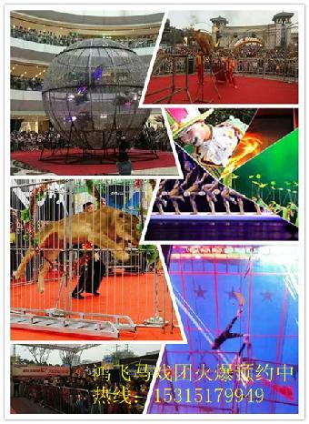 哪有动物马戏团表演的啊?