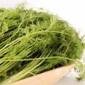 豆芽苗菜——種植的時候怎樣去除苦味