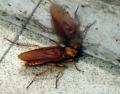 上海驱蟑螂灭蟑螂 上海杀跳蚤公司 上海单位杀老鼠