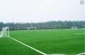 足球場標準專用草皮價格咨詢