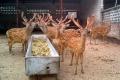 邵阳哪里卖观赏动物孔雀非洲鸵鸟羊驼