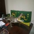 鳄鱼罐头批发零售7月份厂家活动进行中