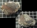 正規鑒定石鐵隕石機構