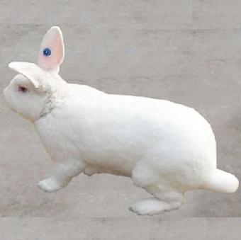 兔子图片大全可爱真实