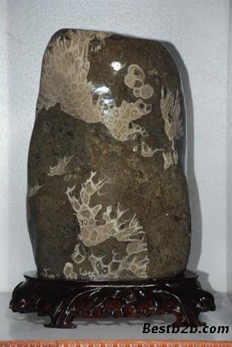 它的花纹会因为珊瑚的大小