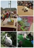 动物租赁表演萌宠动物演出哪里有动物租赁最高赔率公司