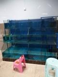 江門市定做海鮮池多少錢一平方 新會區海鮮大排檔魚池