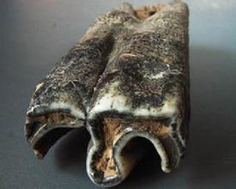 象牙 化石/关键字:象牙化石价位评估象牙化石认证象牙化石转手交易