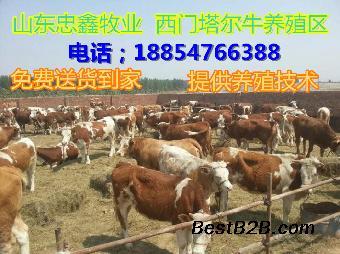 需要牛30头育肥钱养牛_豆角网志趣焖面的面是熟的吗图片