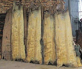金丝楠木阴沉木收藏价值