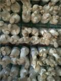 蘑菇铁丝网片价格菌架网片出菇架厂家出菇蘑菇网片生