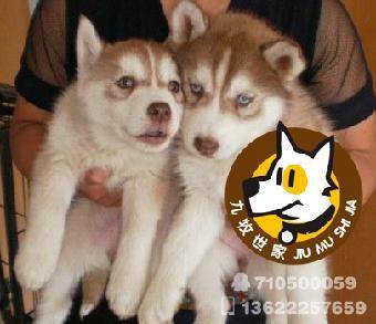 世家名犬繁殖基地专业繁殖各种世界名犬(小型宠物