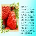 二代全明星草莓苗種植管理