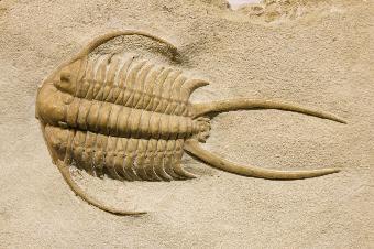 化石幼兽怎么样_化石幼兽怎么样幼兽电影qvod幼兽偷拍自拍